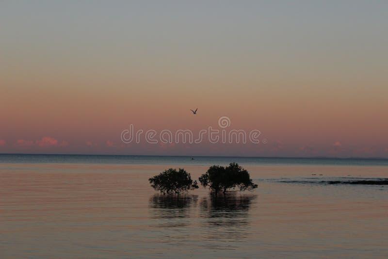 Playa de Scarborough de la puesta del sol con el pájaro imagen de archivo