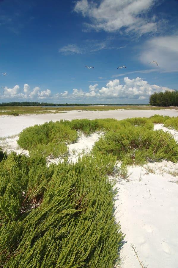 Playa de Tampa fotos de archivo
