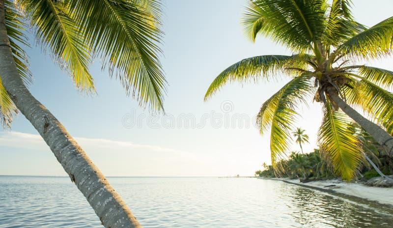 Playa del Caribe Belice fotografía de archivo