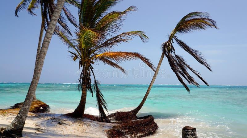 Playa del Caribe con las palmeras en el San Blas Islands entre Panamá y Colombia fotografía de archivo libre de regalías