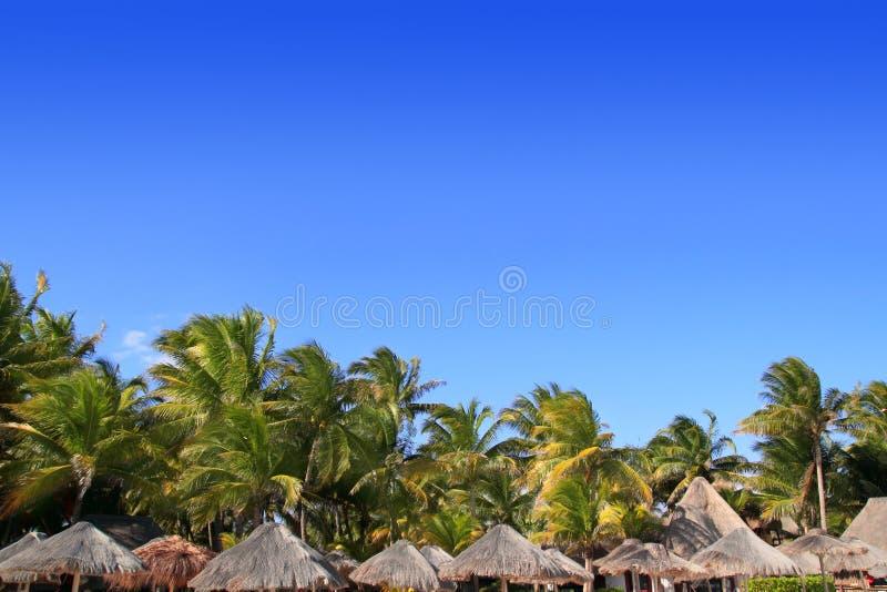 Playa del Carmen tropical palapa palm trees Mexico royalty free stock image