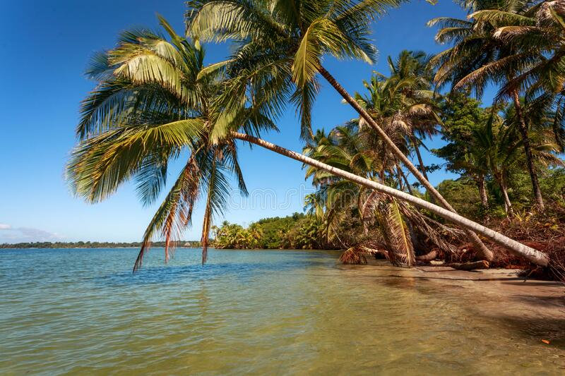 Palm trees over the beach, Playa del Drago stock image