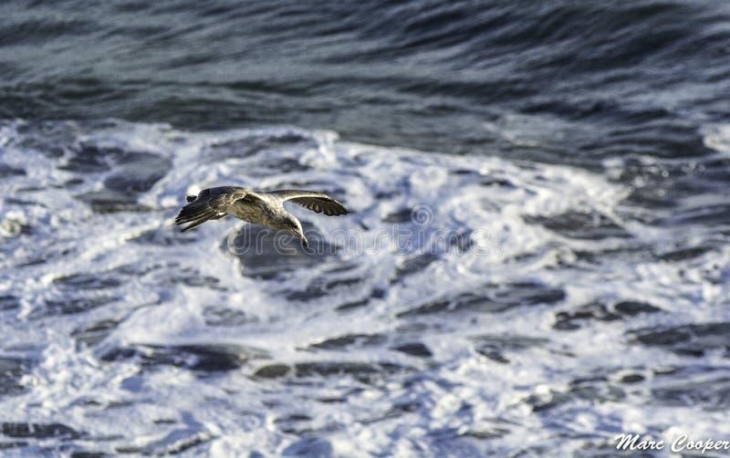Playa del EL matador fotografía de archivo libre de regalías