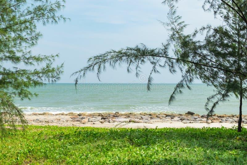 Playa del mar de la visión con el árbol foto de archivo