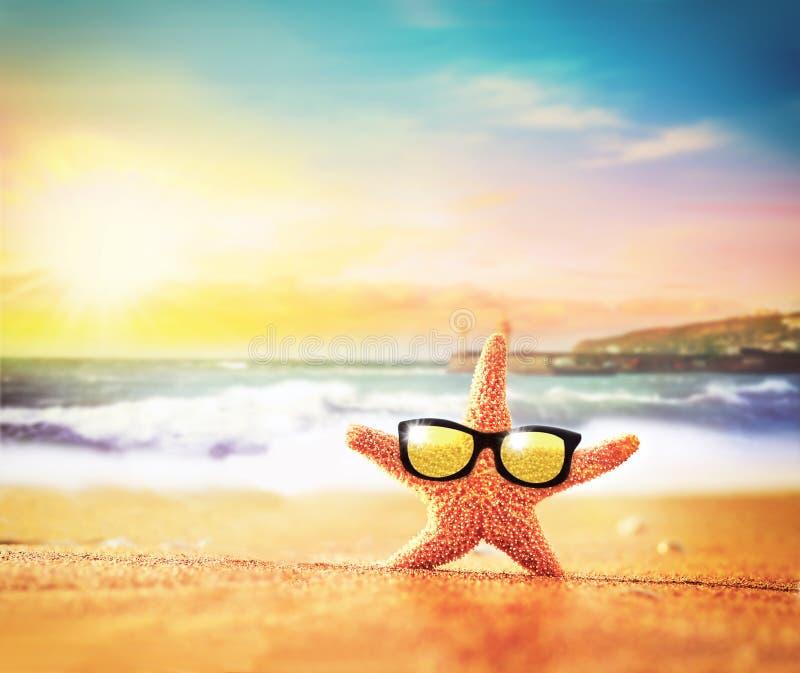 Playa del mar Estrellas de mar en gafas de sol en la costa fotos de archivo