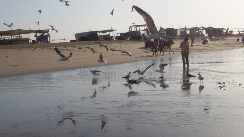 Playa del pájaro imagenes de archivo