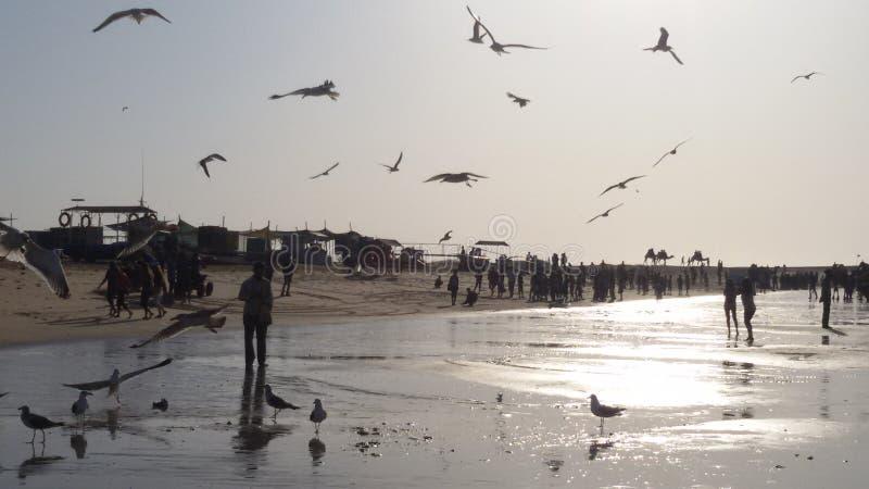 Playa del pájaro fotografía de archivo
