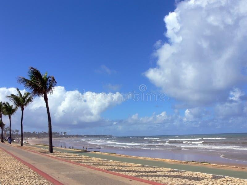 Download Playa del paraíso imagen de archivo. Imagen de árbol, paisaje - 1281711