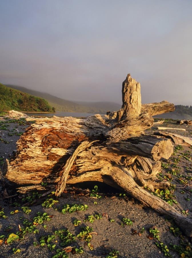 Playa del parque de estado de California del punto de Patrick imagenes de archivo