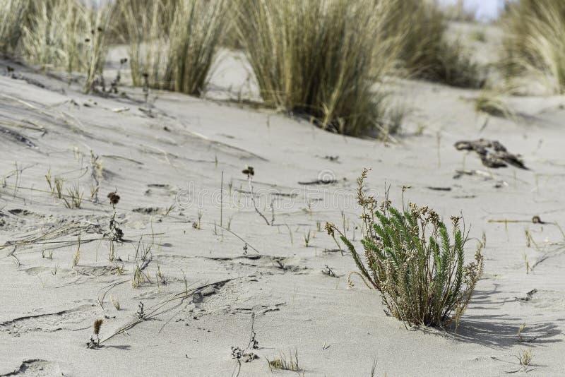 Playa del parque natural de Maremma fotos de archivo libres de regalías