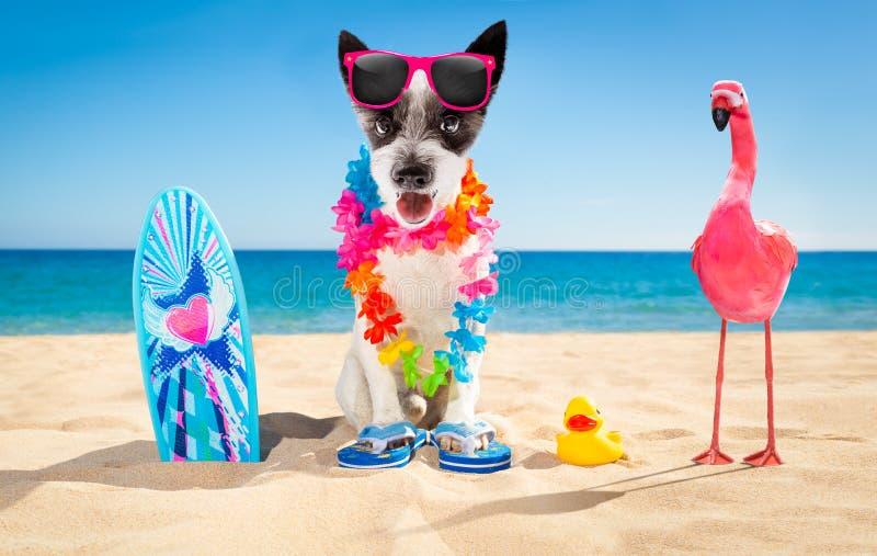 Playa del perro de la persona que practica surf foto de archivo