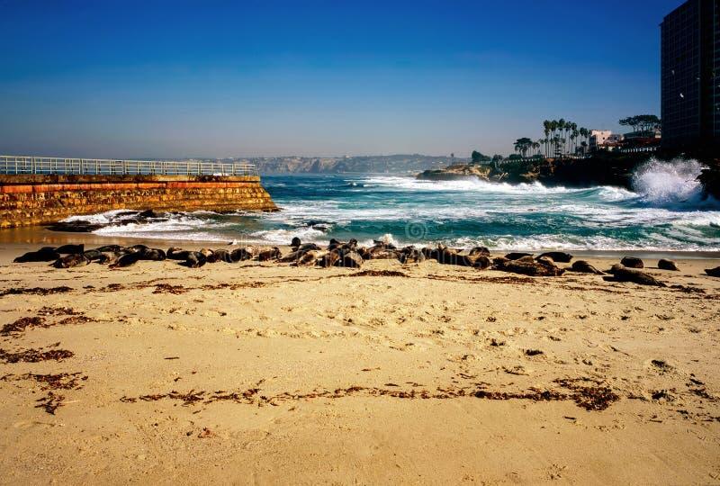 Playa del sello en California imagen de archivo