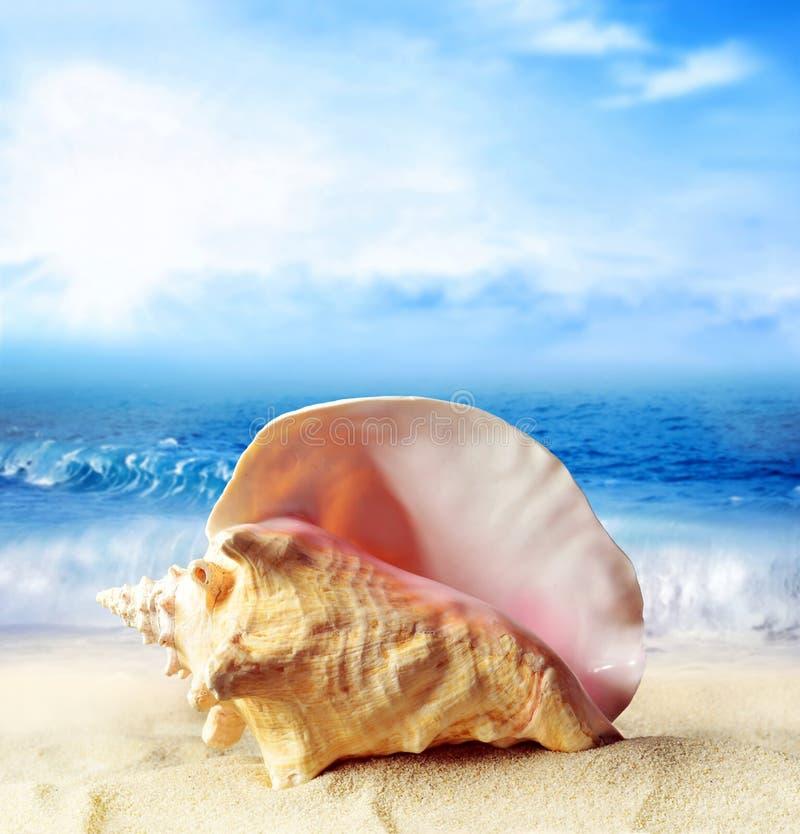 Playa del verano Concha marina en una arena y océano como fondo fotos de archivo