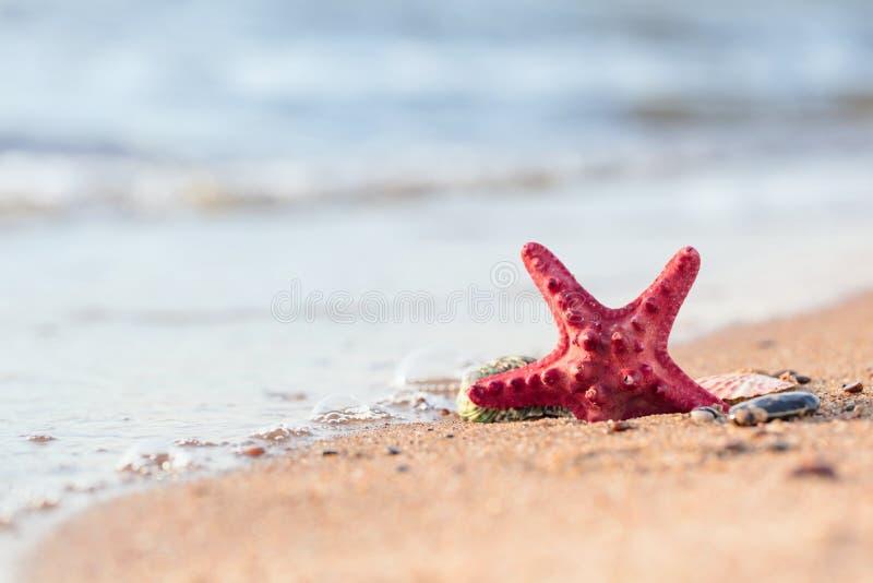 Playa del verano en un paraíso tropical con una concha marina y una estrella de mar en la arena de oro fotografía de archivo