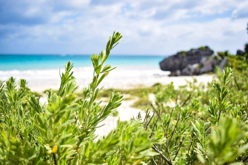 Playa della spiaggia immagine stock libera da diritti