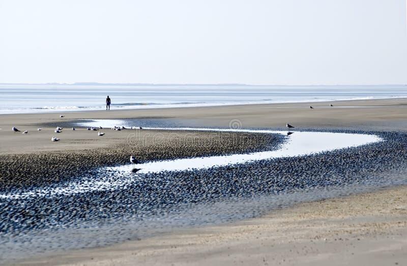 Playa durante la bajamar fotos de archivo