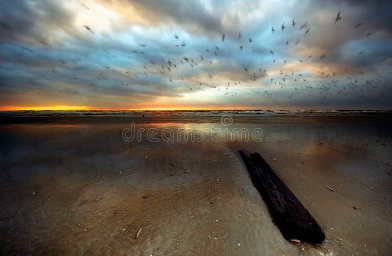 Playa en la noche foto de archivo libre de regalías