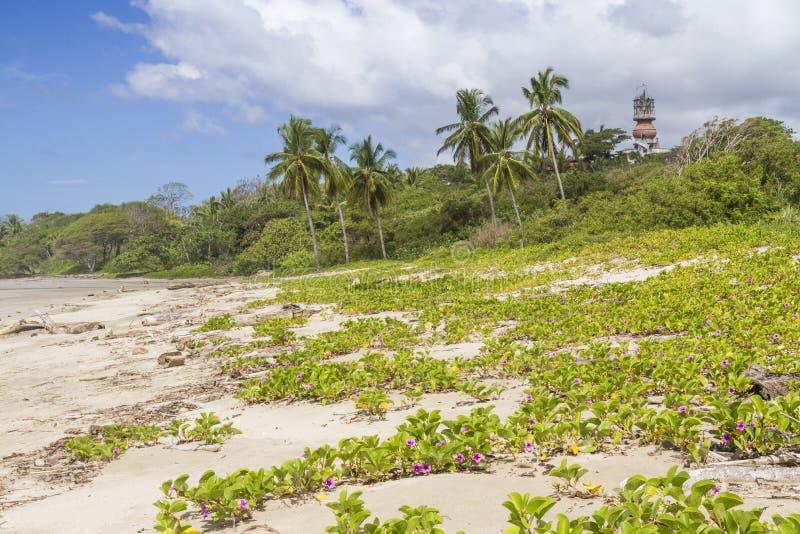 Playa Guiones dyn och hotell Nosara arkivfoto