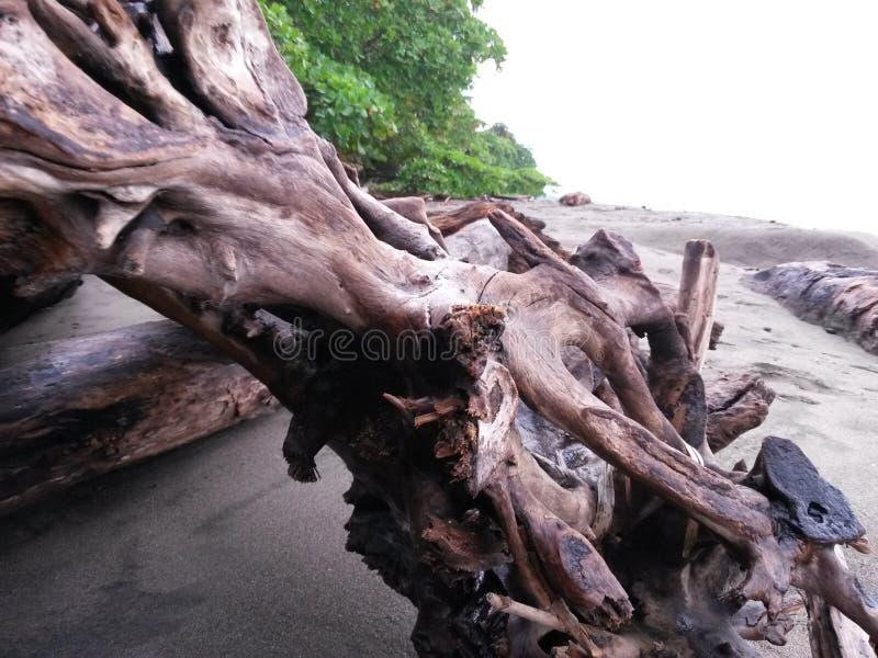 playa hermosa costa rica stock photos