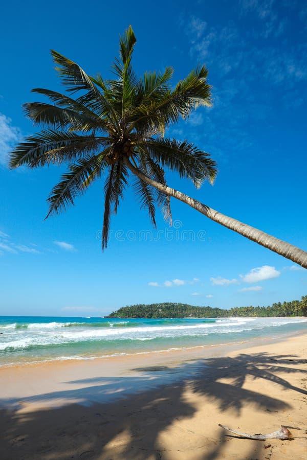 Playa idílica con la palma. Sri Lanka foto de archivo libre de regalías