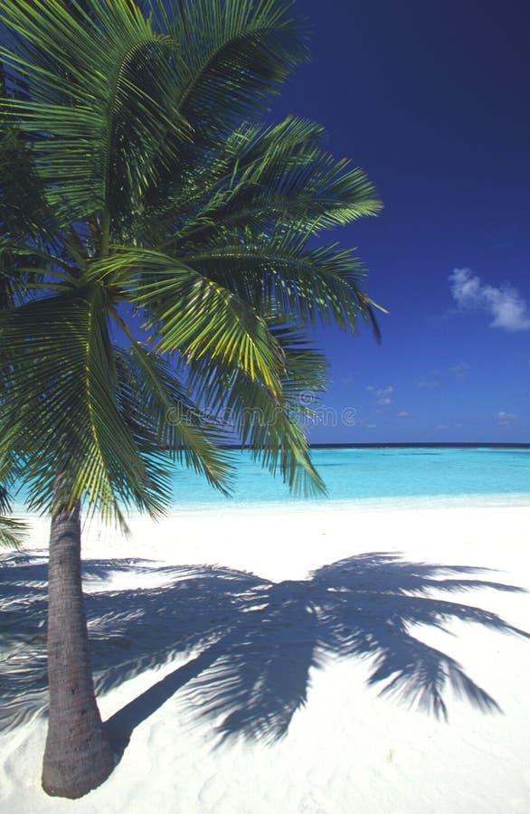 Playa idílica de Maldives imagen de archivo