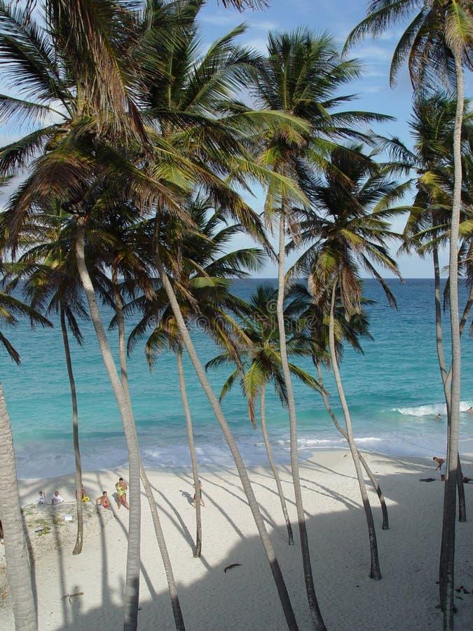 Playa inferior de la bahía, Barbados imagen de archivo