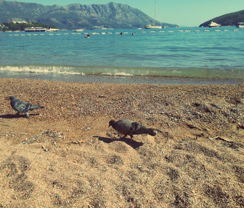 Playa, isla, montañas, paloma y mar asombrosos fotos de archivo