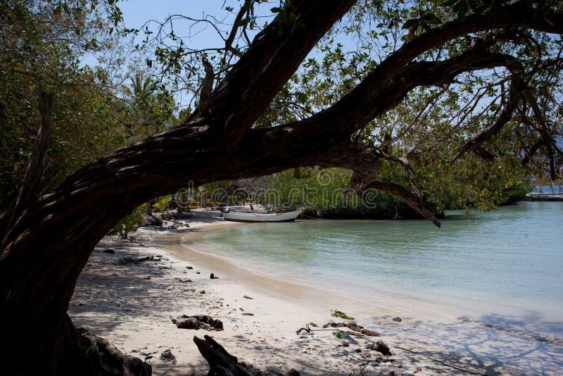 Playa lasy Gatas obraz royalty free