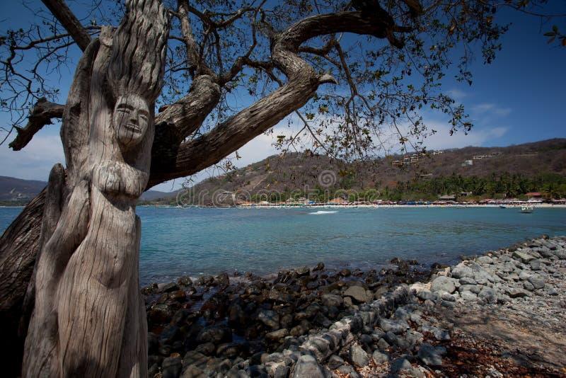 Playa lasy Gatas obrazy royalty free