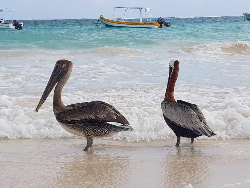 Playa México de Tulum imágenes de archivo libres de regalías