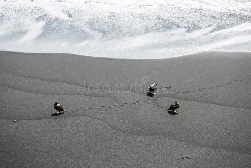 Playa negra, Vik, Islandia foto de archivo