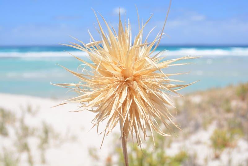 Playa pacífica con la planta en punto focal fotografía de archivo