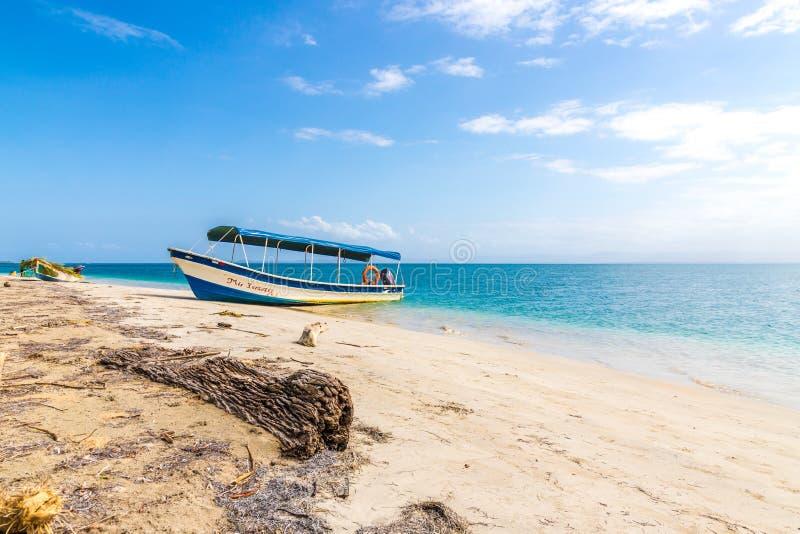 Playa Panamá de las estrellas de mar imágenes de archivo libres de regalías