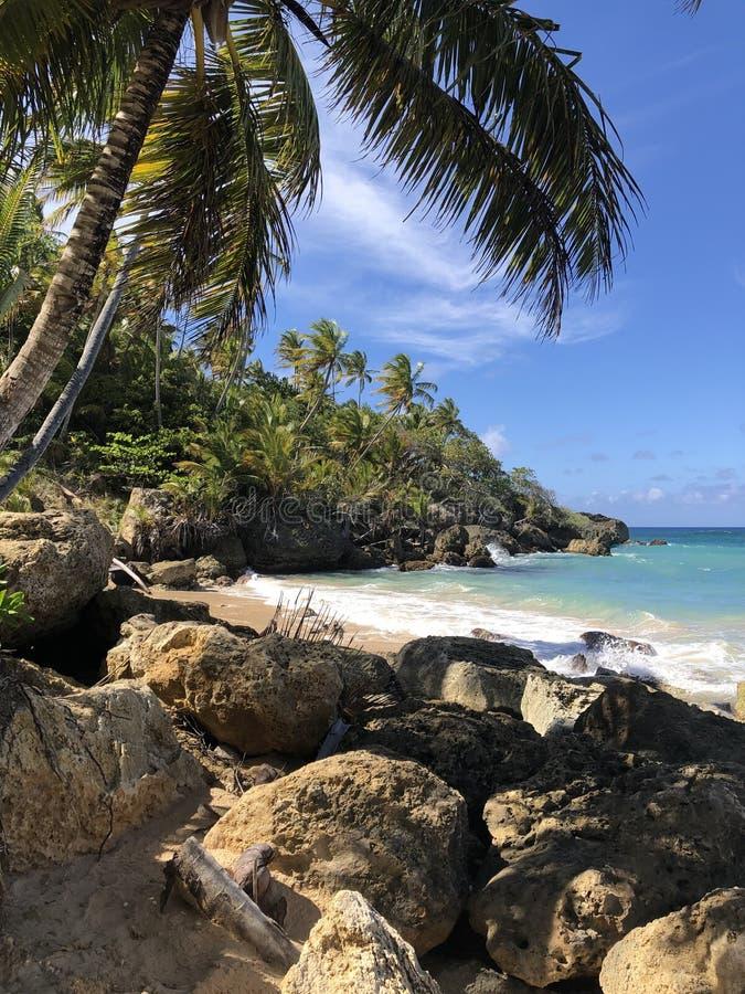 Playa Preciousa 免版税图库摄影