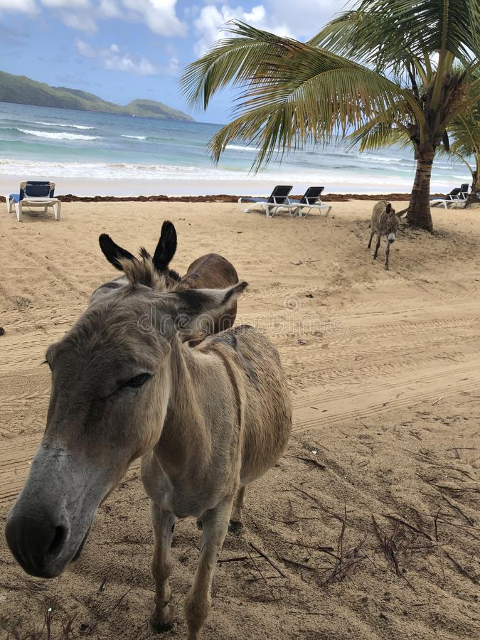 Playa Rincon photo stock
