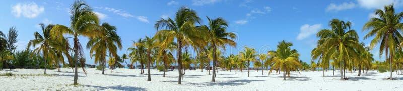 Playa Sirena morza karaibskiego Tropikalni Plażowi drzewka palmowe Cayo Largo Kuba obraz stock