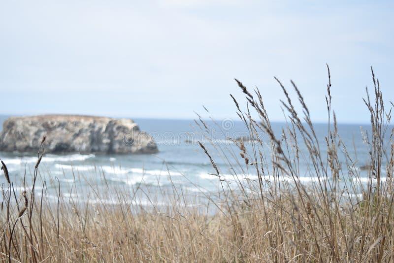 Playa a través de las malas hierbas foto de archivo