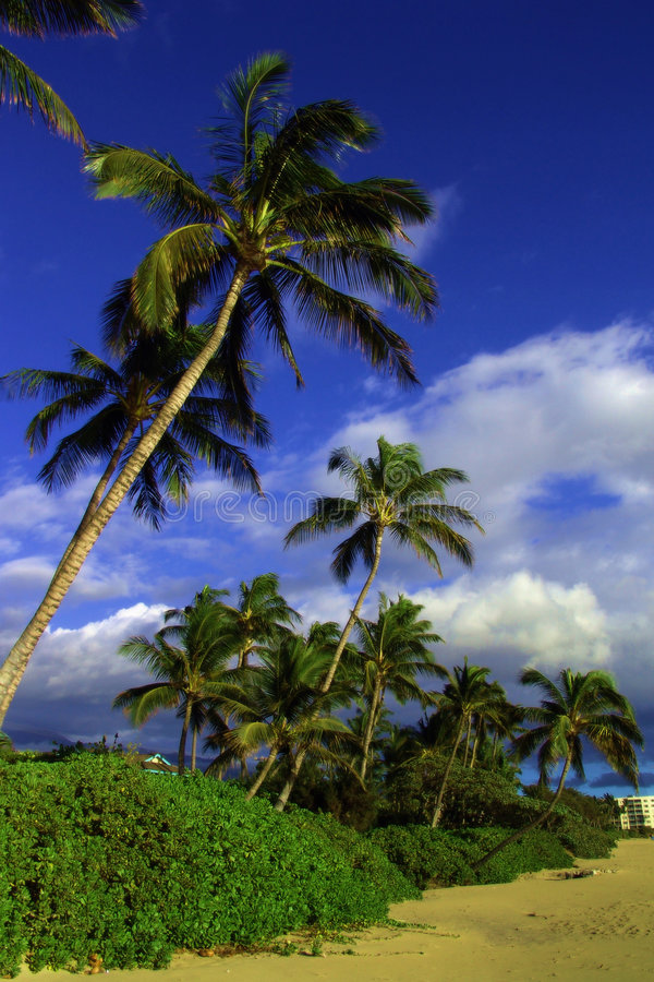 Download Playa tropical foto de archivo. Imagen de rocoso, tropical - 184464