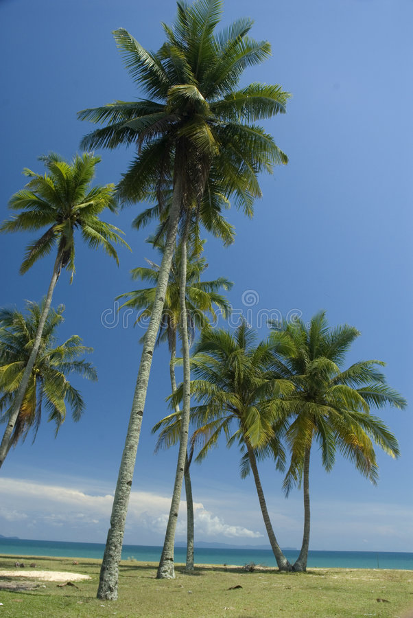 Playa tropical asoleada imagen de archivo