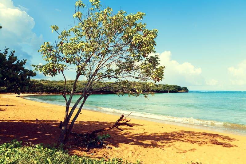 Playa tropical caliente foto de archivo