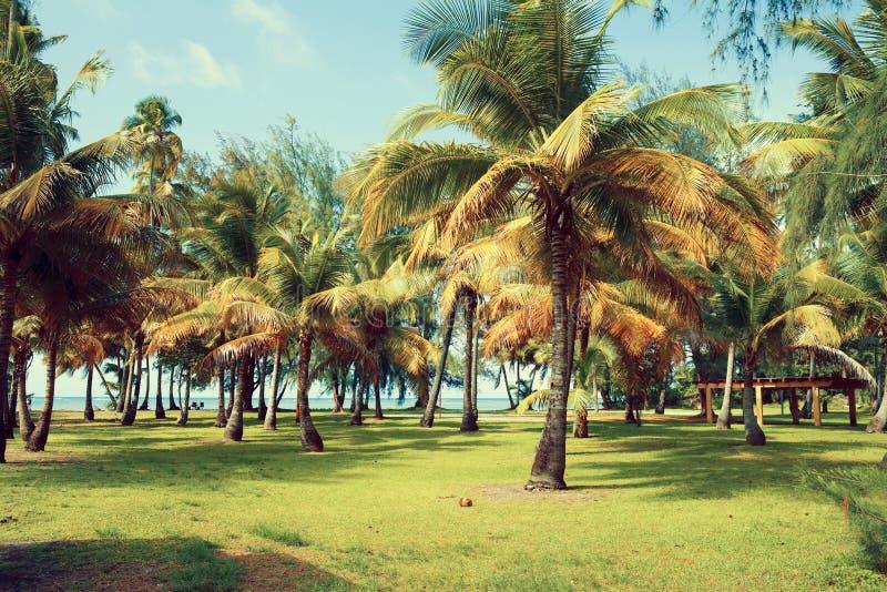 Playa tropical caliente fotos de archivo