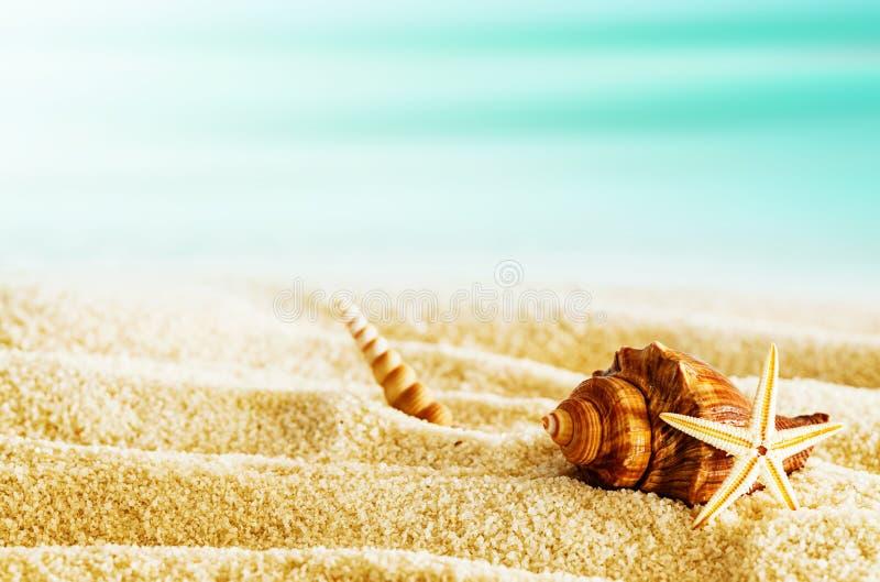 Playa tropical con las conchas marinas en un día de verano caliente fotografía de archivo