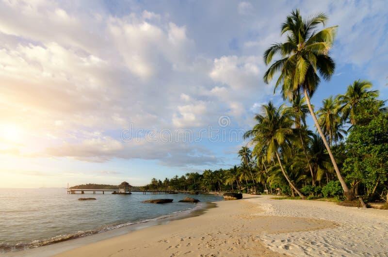 Playa tropical con olas de mar y palmeras de coco y asombroso cielo nublado al atardecer en Phuket, Tailandia. Verano, viajes, vac foto de archivo libre de regalías