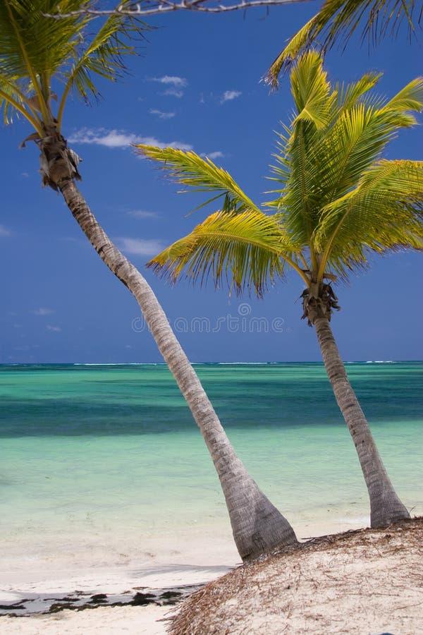 Playa tropical de las palmeras fotos de archivo libres de regalías