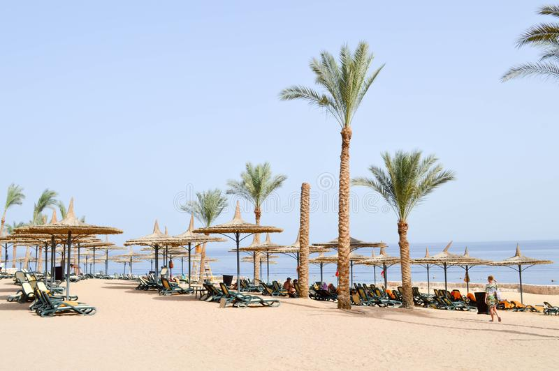 playa tropical el vacaciones, un centro turístico tropical con las camas del sol, ociosos del sol y sombrillas bajo la forma de s imagen de archivo