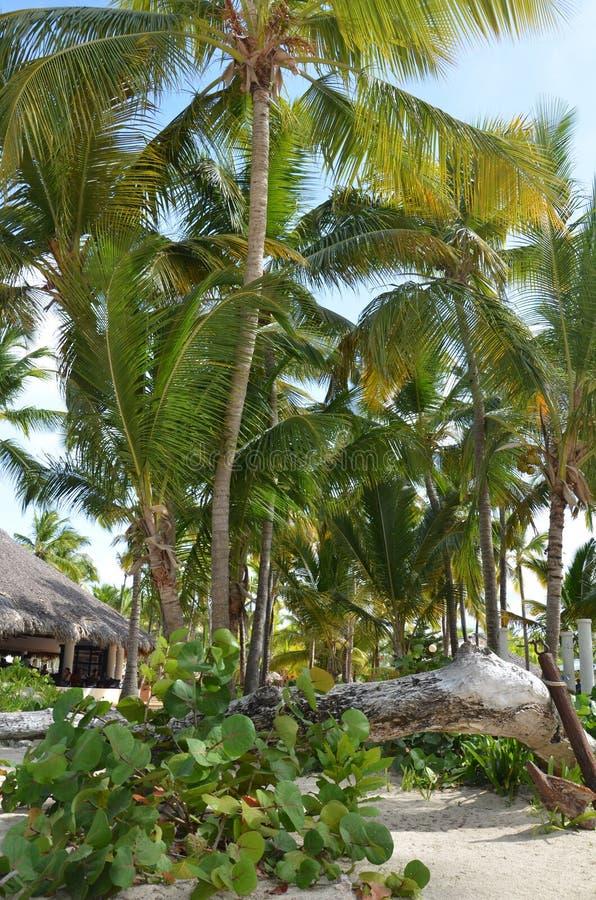 Playa tropical exótica con las casas de planta baja entre las palmeras foto de archivo
