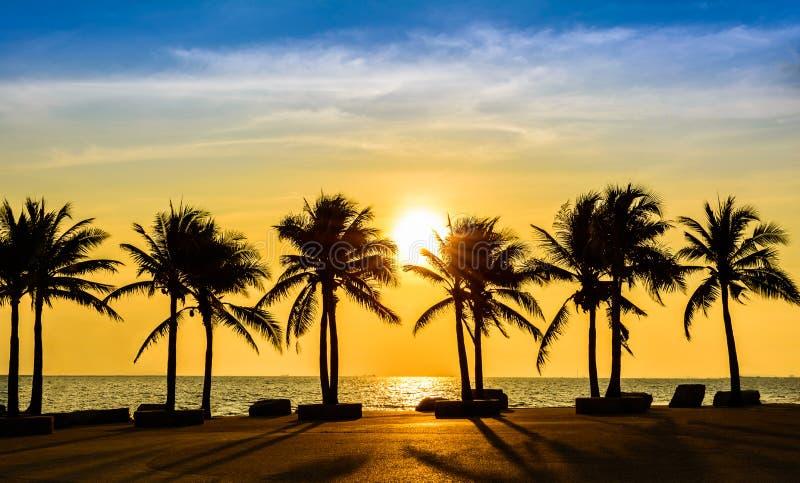 Playa tropical fantástica con las palmas en la puesta del sol foto de archivo