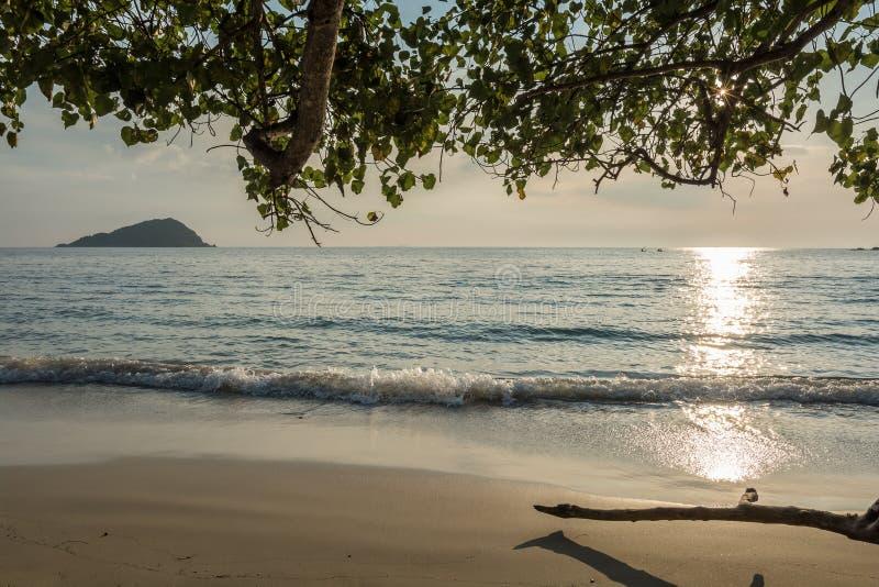 Playa tropical sola debajo de árboles fotografía de archivo
