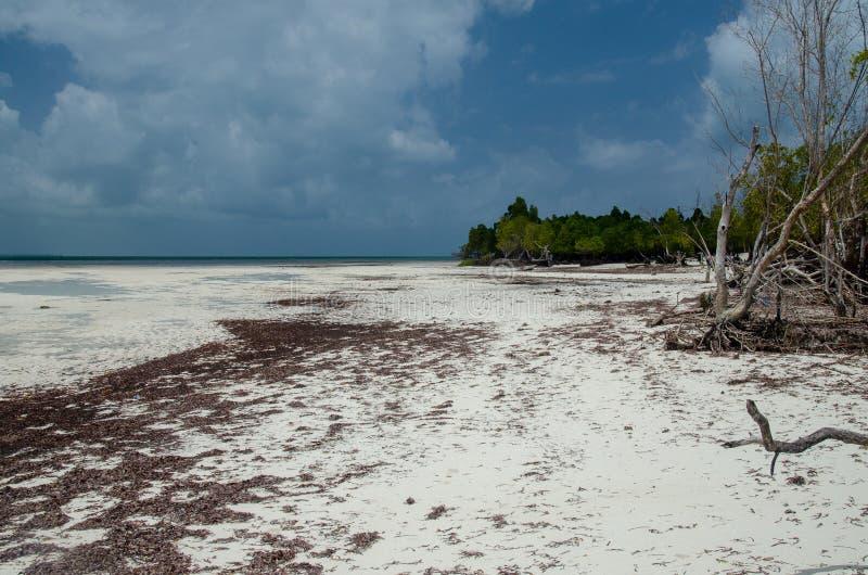 Playa tropical Zanzíbar, Tanzania, África foto de archivo