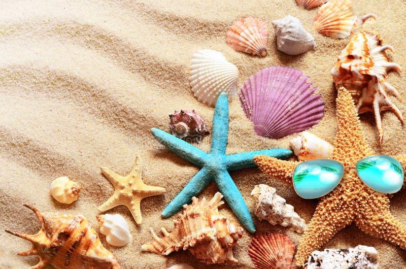 Playa Verano Estrellas de mar en gafas de sol y concha marina en la costa fotografía de archivo libre de regalías